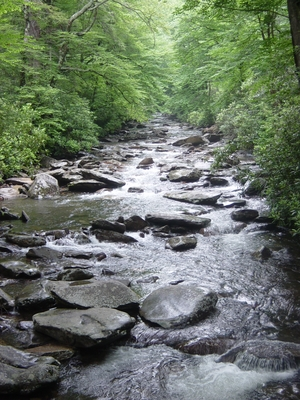 A cool stream on Mount LeConte - Hiking Tennessee
